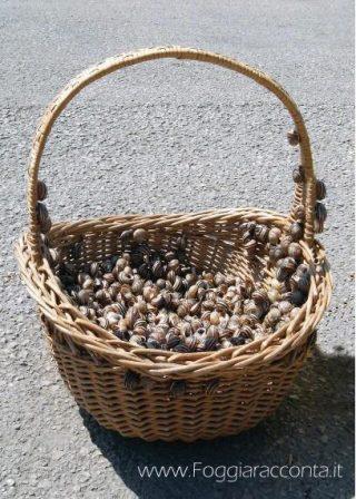 Cesto di Eobania vermiculata, mercato rionale di Foggia.